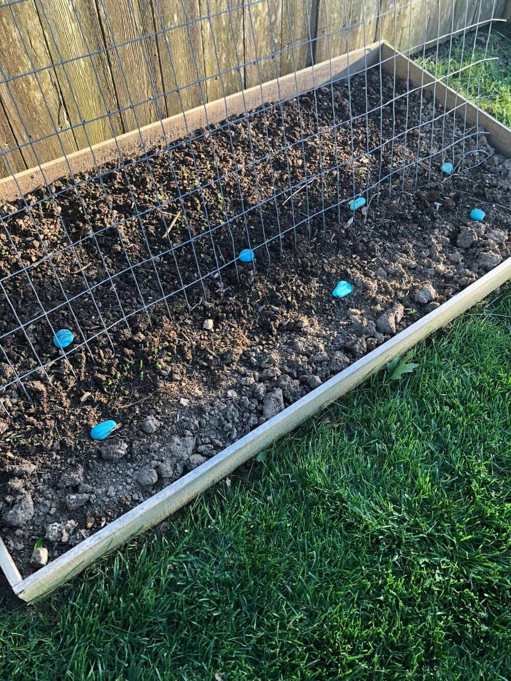 DIY blue plant markers scattered around the garden beds, marking plants