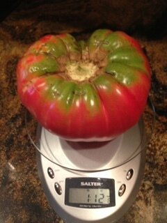 tomato on a scale