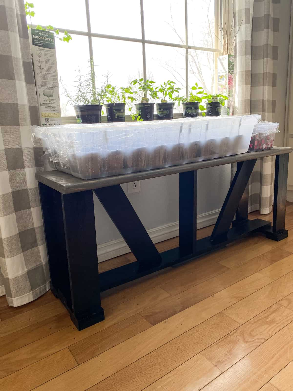 a diy plant bench with seedling on top