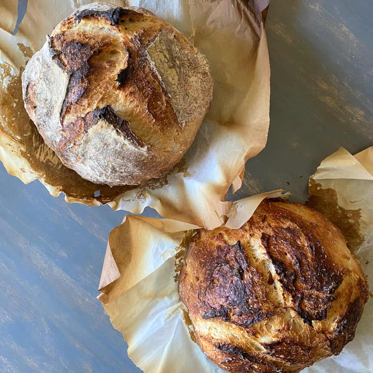 two rustic dutch oven sourdough bread boules on parchment paper